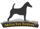 McFox Smooth Fox Terrier